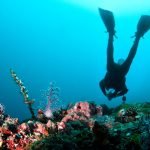 buceo-12